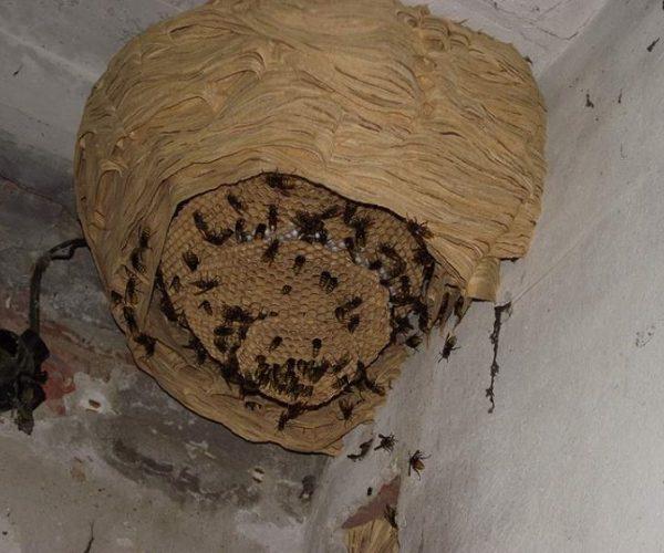 Уничтожение гнезд от ПроКомфорт